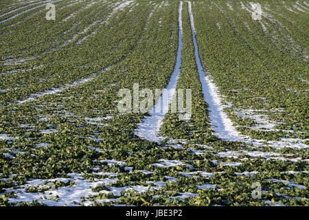 Schneereste in den Fahrspuren eines Feldes - Stock Photo