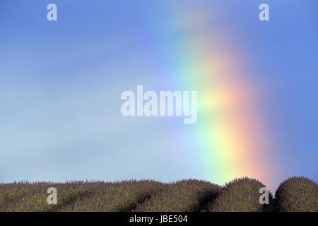 Rainbow on the Plateau of Valensole, Alpes de Haute-Provence, Provence, France - Stock Photo
