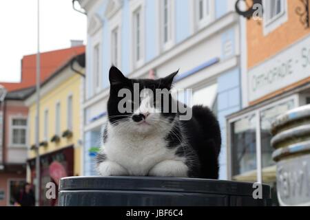 Hauskatze macht es sich am Abfallkuebel mitten am Stadtplatz gemuetlich