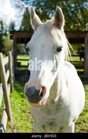 White horse in the autumn sun side lit - Stock Photo