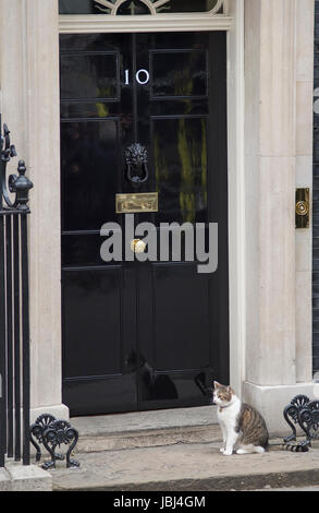 Downing Street, London, UK. 9th June, 2017. Larry the cat outside No 10 Downing Street - Stock Photo