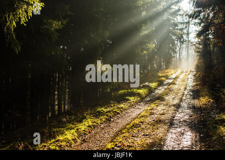 Forest path with lovely rays of sunlight - Stock Photo