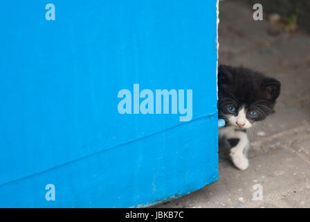 beautiful kitten looking out from the corner Stock Photo