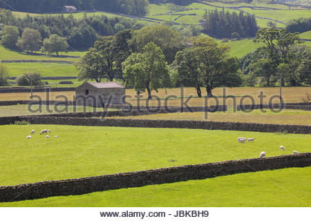 Summer meadows at Askrigg Bottoms, Wensleydale, Yorkshire - Stock Photo