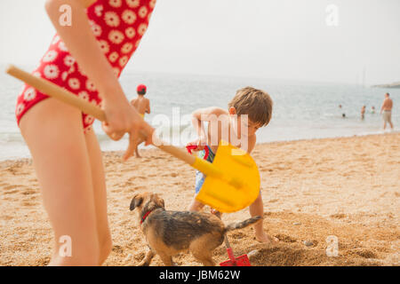 Boy and girl brother and sister playing with dog and digging in sand with shovels on sunny beach - Stock Photo