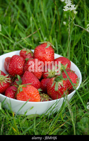 Freshly picked strawberries in a white bowl of porcelain in the grassy meadow. - Stock Photo