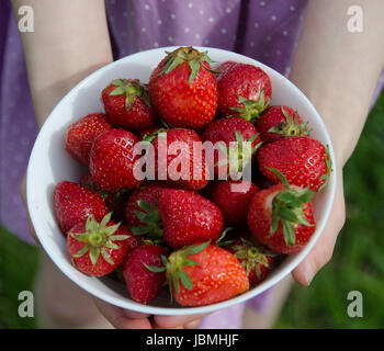 Young girl holding freshly picked strawberries in a white bowl of porcelain in the grassy meadow. - Stock Photo