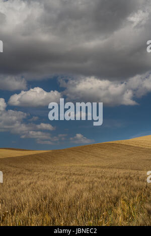 Where Sky Meets Earth - Rolling, colorful barley fields create a unique design as lovely clouds punctuate a deep - Stock Photo