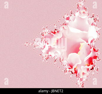 Beautiful pink fractal floral pattern background pink and white. - Stock Photo