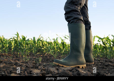Farmer in rubber boots standing in the field of cultivated corn maize crops - Stock Photo