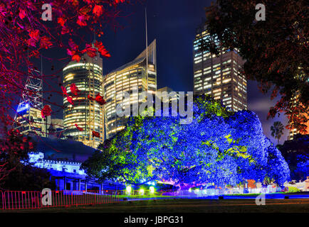 Sydney Royal Botanic gardens big tree brightly illuminated in blue light against CBD skyscraper towers during Vivid - Stock Photo