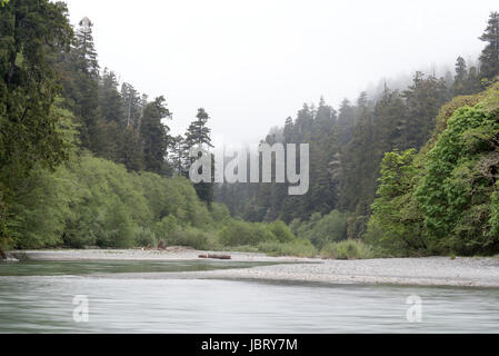 Redwood Creek on a foggy day, Redwood National Park, California. - Stock Photo