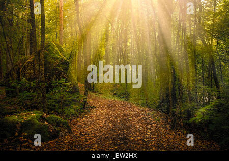 Idyllic path with sun flares at autumn morning in national park Finland - Stock Photo