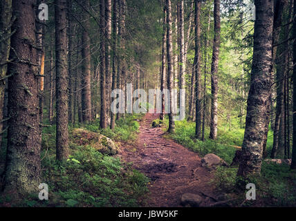 Idyllic landscape with path and primeval forest at summer morning in Koli, Finland - Stock Photo