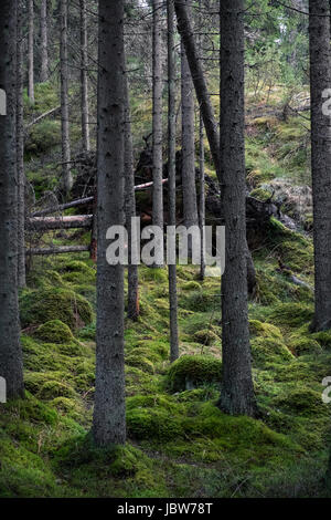 Old primeval forest with nice lights and shadows - Stock Photo
