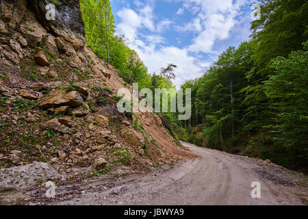 Dirt road going through a deciduous forest - Stock Photo