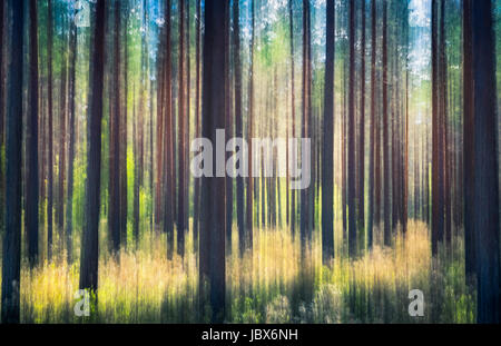 Whispering trees. This effect has been made by swinging the camera. This has been taken by sunny summer day in pine - Stock Photo