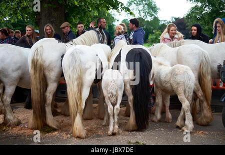 Horses lined up for sale in Appleby at the Appleby Horse Fair. - Stock Photo
