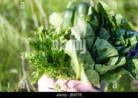 Assortment of fresh organic vegetables in wooden box. Person holds a crate of farm products in his hands, selective - Stock Photo