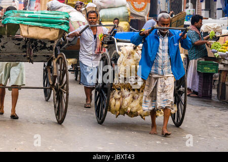 Chicken are bound together and transported by pull rickshaw in the suburb New Market - Stock Photo