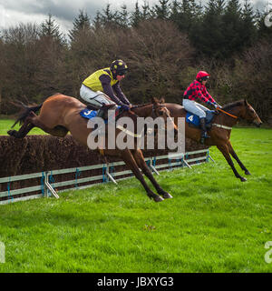 Point to Point horse jumping, Eggesford Hunt, England uk - Stock Photo