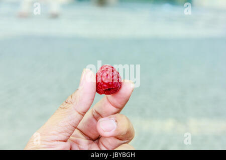 close up rasberry in the man hand - Stock Photo