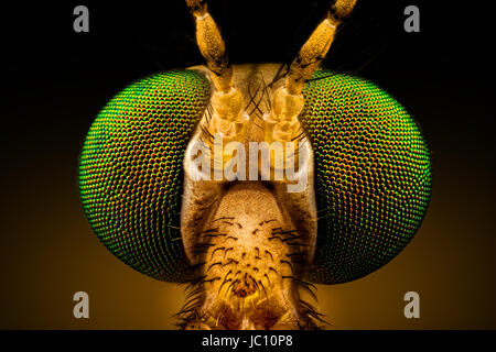 Extreme macro - full frontal portrait of a green eyed crane fly, magnified through a microscope objective (width - Stock Photo