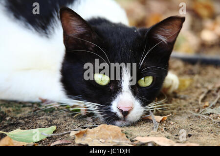 Feral cat in a sad mood - shot at Heritage Park, Abu Dhabi - Stock Photo