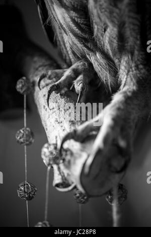 Closeup black and white photo of hawk clutches sitting on big branch - Stock Photo