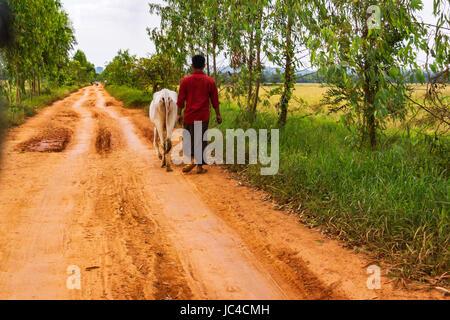 Bilu Island, farmer and cow walking along dry rural landscape. - Stock Photo