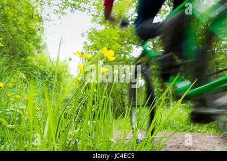 Mountain biker on Castle Eden walkway, County Durham. UK - Stock Photo