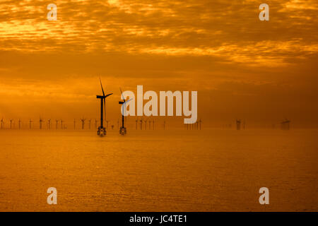 Wind turbines of the Thorntonbank Wind Farm, offshore windfarm off the Belgian coast in the North Sea at sunset - Stock Photo