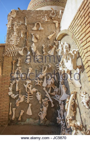 TOZEUR, TUNISIA - SEPTEMBER 16 : A wall displaying different animal bones on September 16th, 2012 in Zoo in Tozeur, - Stock Photo