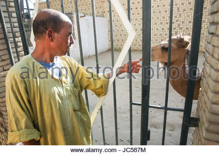 TOZEUR, TUNISIA - SEPTEMBER 16: A  worker in a zoo touching the nose of camel in cage on September 16th, 2012  in - Stock Photo