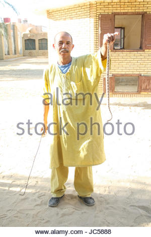 TOZEUR, TUNISIA - SEPTEMBER 16 : A man holding a horned viper on September 16th, 2012 in Zoo in Tozeur, Tunisia. - Stock Photo