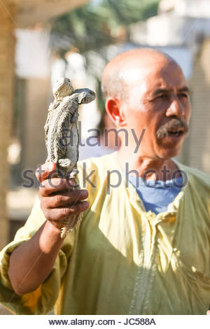 TOZEUR, TUNISIA - SEPTEMBER 16 : A man holding two desert monitors on September 16th, 2012 in Zoo in Tozeur, Tunisia. - Stock Photo