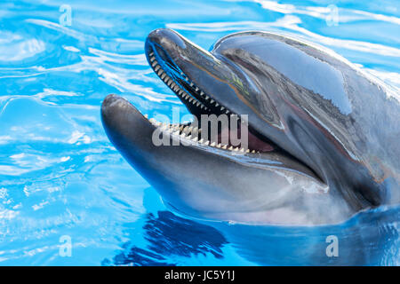 Portrait of a dolphin close-up - Stock Photo