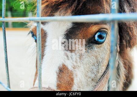 Blue eyed horse - Stock Photo