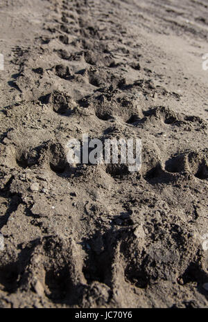 Closeup of caterpillar tracks traces on the ground. - Stock Photo