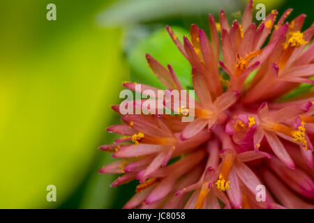 Tiny detailed pink flower in the wild - Stock Photo
