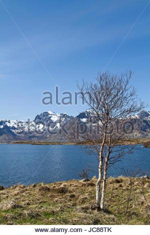 Blick von der Insel Gimsoy über den Sundklakkstraumen nach Vestavagoy - Stock Photo
