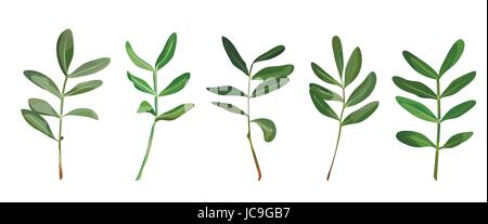 Eucalyptus foliage natural branches with leaves tropical elements in watercolor style set, collection. Vector decorative - Stock Photo