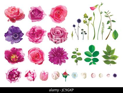Vector Big Selection of Various Flowers Leaves including Rose, Dahlia Daisy Anemone Tulip Isolated on White Background. - Stock Photo