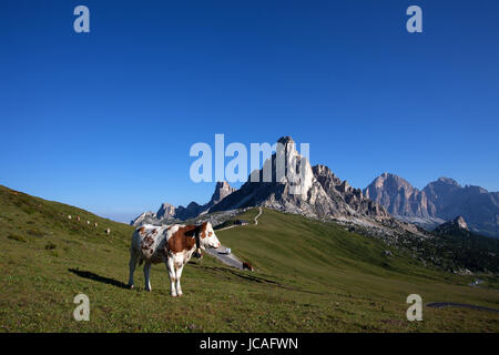 A herd of cows grazing on a picturesque meadow on Passo Giau, Dolomites, Italy. - Stock Photo