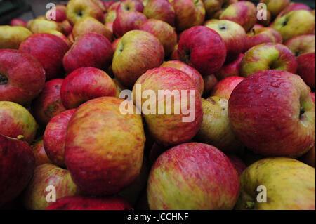 apfel,äpfel,obst,frucht,früchte,pflanzen - Stock Photo