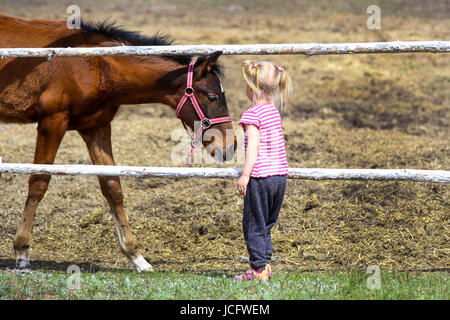 Young blond girl feeding a brown horse on a farm. - Stock Photo