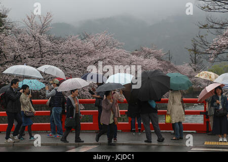 Bright red railings of a bridge over a canal in Kyoto where Japanese with umbrellas are walking in the rain, cherry - Stock Photo