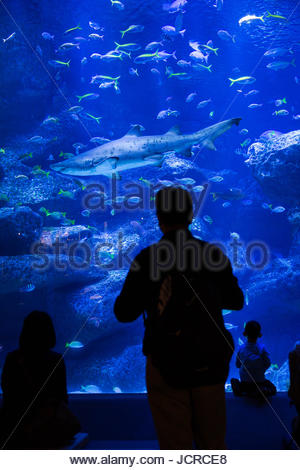 Tourists look at a shark and other fish in the Sumida Aquarium in Tokyo. - Stock Photo