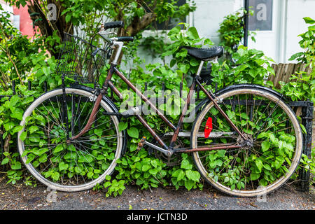 Old vintage wet bicycle covered in water drops and attached to metal railing on sidewalk by garden during rain in - Stock Photo
