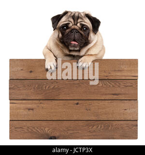 cute smiling pug puppy dog hanging with paws on blank wooden promotional sign, isolated on white background - Stock Photo